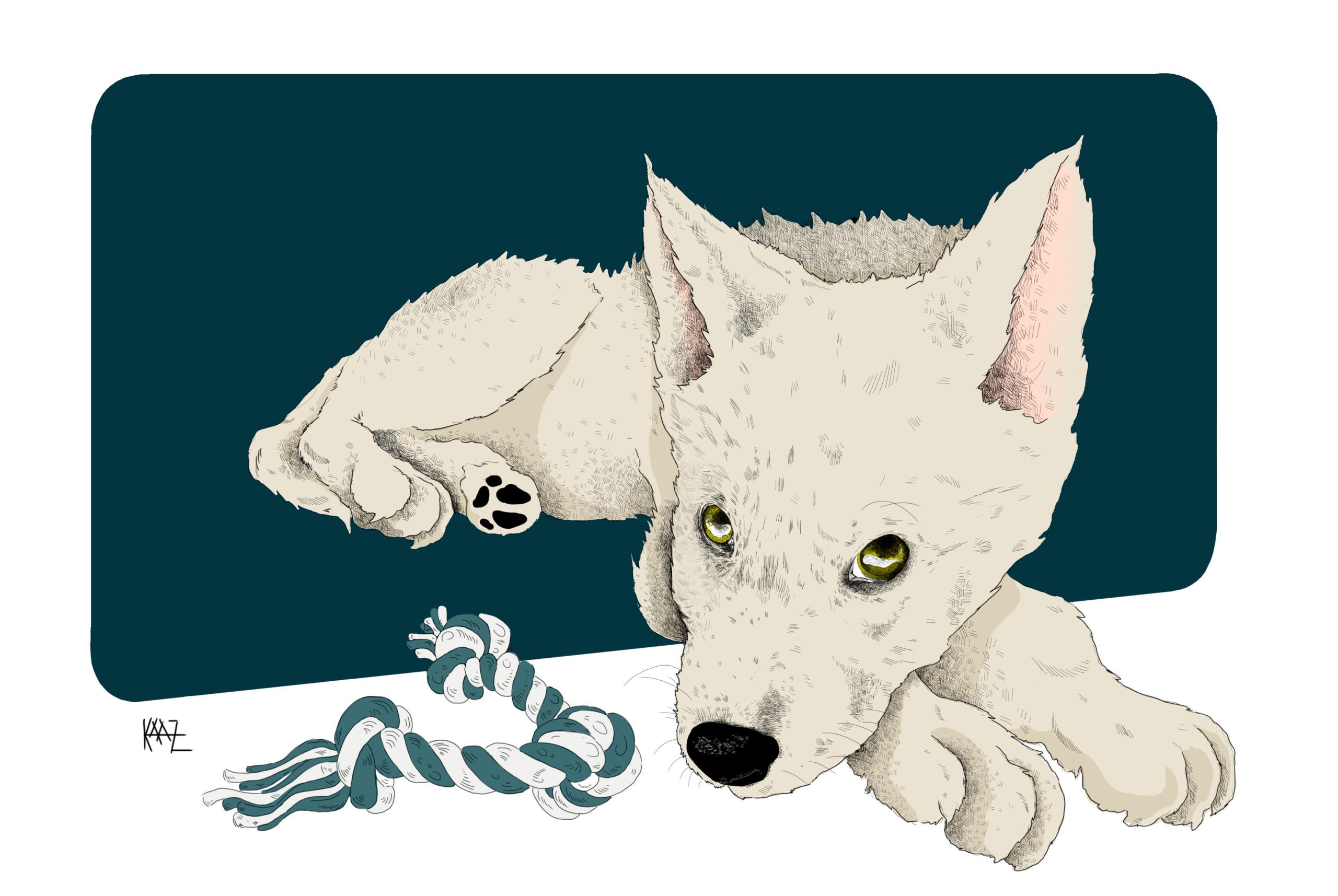 Tu primer lobo